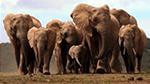 elefanti-logo